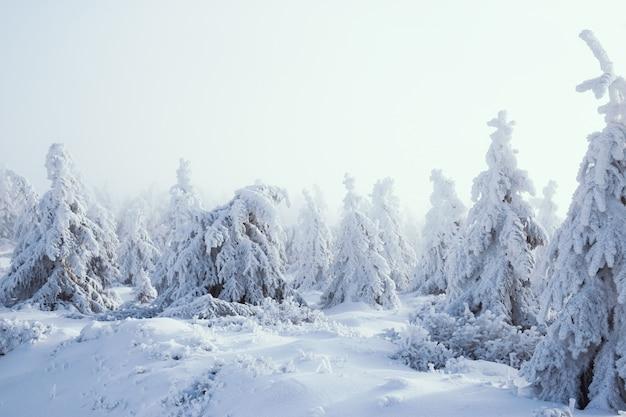 Winterwald mit schneebedeckten bäumen und nebel
