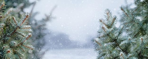 Winterwald mit schneebedeckten bäumen während eines schneefalls