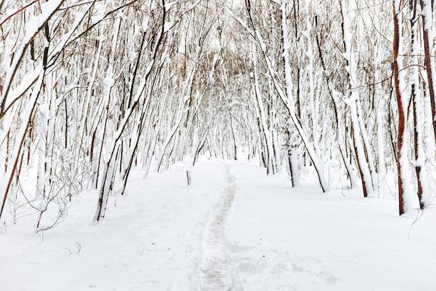 Winterwald mit weg und weißen bäumen im schnee
