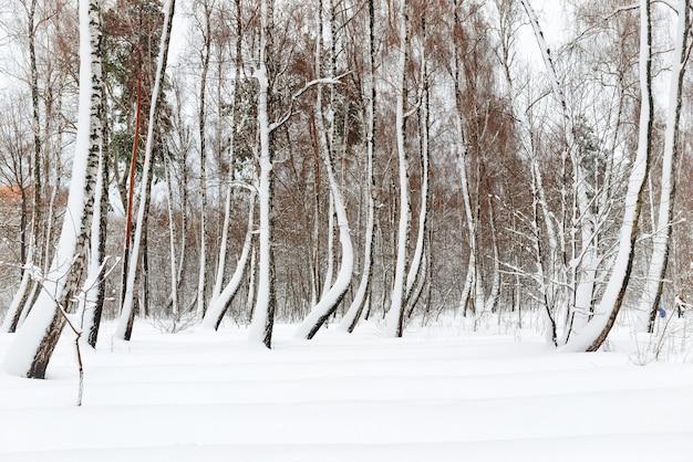 Winterwald mit weißen bäumen im schnee