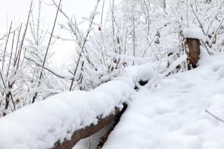 Winterwald, objekt