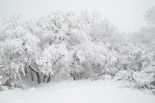 Winterwald – schnee und schöne eisige bäume