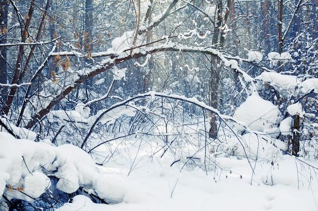 Winterwald-szene