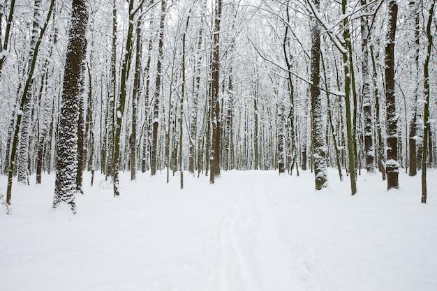 Winterwald und die straße