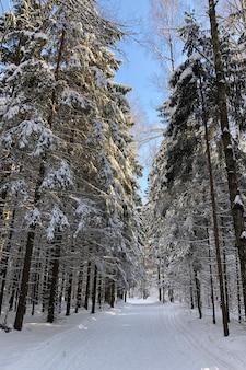 Winterwaldlandschaft mit verschneiter straße durch die tannen