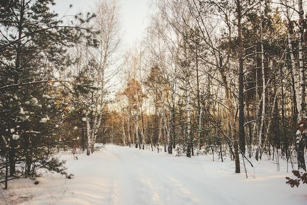Winterwaldlichthintergrund mit birken bedeckt mit schnee