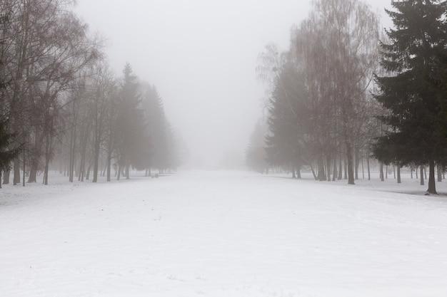 Winterwetter im park