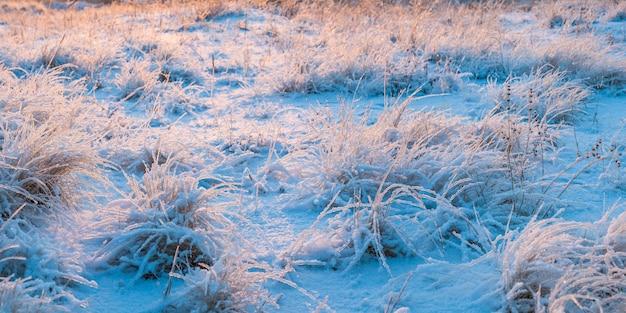 Winterwiese mit gras stand und schnee