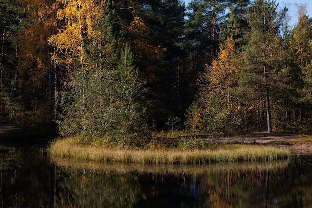 Winzige insel mitten im teich im frühherbstwald