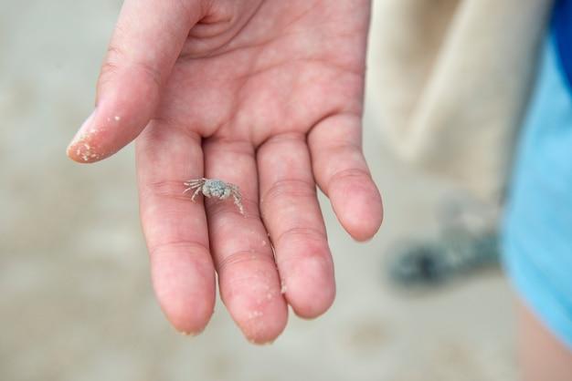 Winzige krabbe auf frauenhand