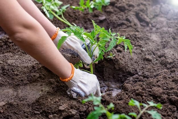 Wir pflanzen setzlinge