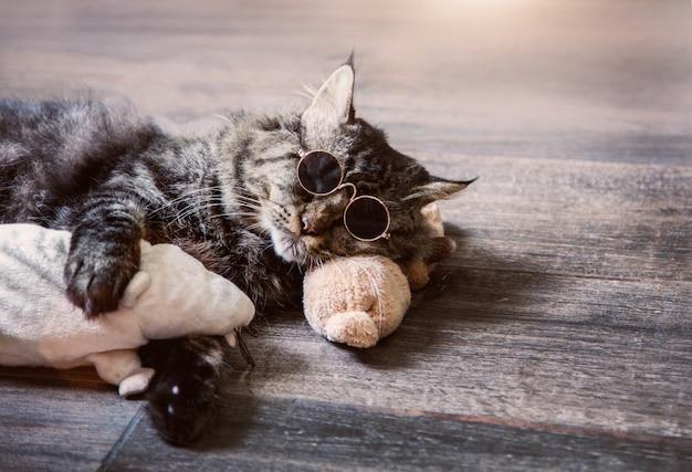 Wirkliche katze, die mit rattenpuppe schläft und sonnenbrille trägt