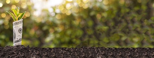 Wirtschaftswachstumssymbol einhundert-dollar-schein mit einer pflanze oder einem blatt, das aus der erde mit unscharfem grünem hintergrund wächst, bannerbild mit kopienraum