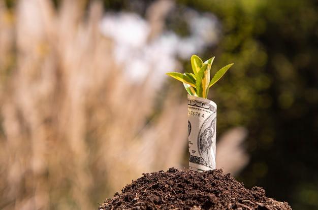 Wirtschaftswachstumssymbol einhundert-dollar-schein mit einer pflanze oder einem blatt, das aus der erde mit unscharfem grünem hintergrund wächst
