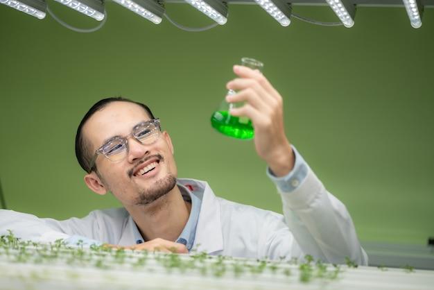 Wissenschaftler, der an der erforschung der grünen pflanzen der landwirtschaft im gewächshaus des biologie-wissenschaftslabors arbeitet, organischer experimenttest für medizinische lebensmittelbiotechnologie, botanik-ökologie-biologe im landwirtschaftlichen wachstum