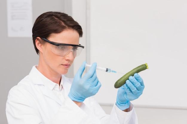 Wissenschaftler, der aufmerksam mit zucchini arbeitet