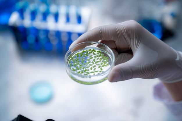 Wissenschaftler forschen an pflanzen im labor mit dem mikroskop