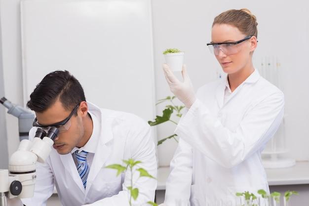 Wissenschaftler untersuchen pflanzen