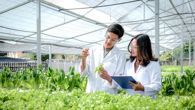 Wissenschaftler untersuchten die qualität von gemüse-bio-salat und salat aus hydrokultur-farm