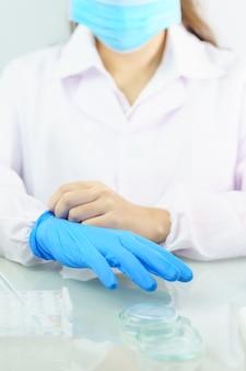 Wissenschaftlerhände, die im labor nitrilblaue latexhandschuhe anziehen und nitrilhandschuhe tragen