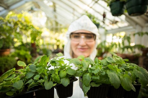 Wissenschaftlerin, die topfpflanzen hält