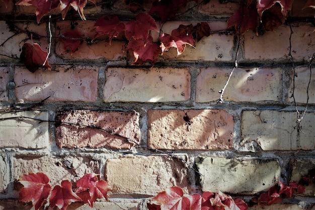Witherspoon blätter der backsteinmauer