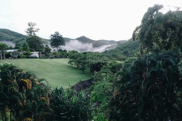 Wolken, die schönen täler suan phueng-berg in der regenzeit, thailand bedecken