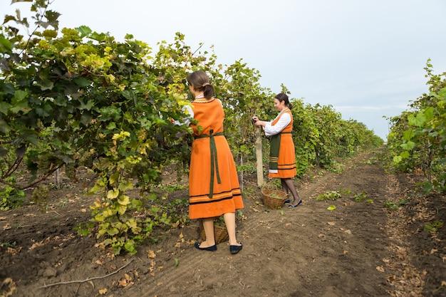 Womans, die an der weinfarm arbeiten person bauer in der ländlichen landschaft in einem volkskostüm