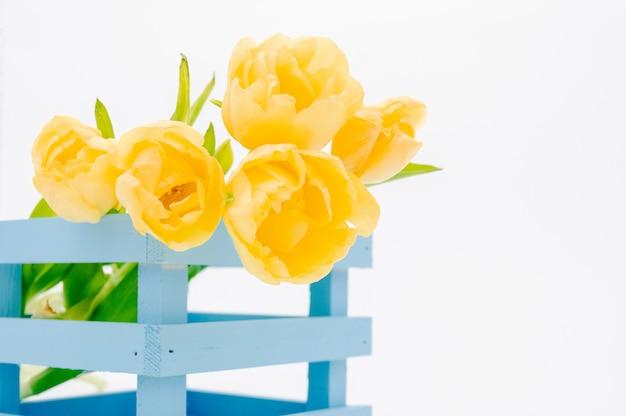 Womans feiertag gelbe frühlingstulpen w