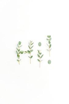 Wort hallo aus eukalyptuszweig auf weißem hintergrund. flache lage, ansicht von oben