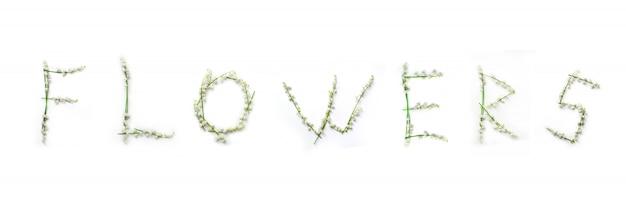 Wort von maiglöckchenblumen lokalisiert auf weiß