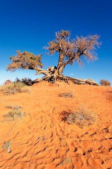 Wüstenbaum bei monument valley, arizona
