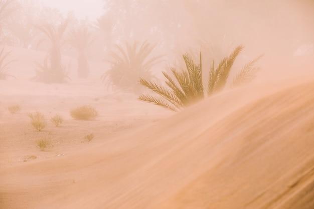 Wüstenlandschaft in marokko