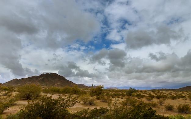Wüstenlandschaft in phoenix, arizona-kaktus auf dem berg