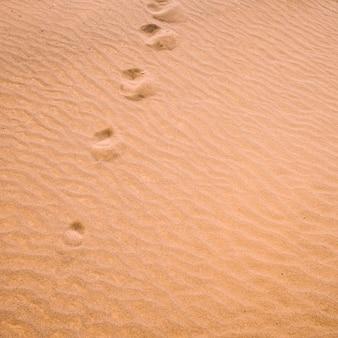 Wüstenlandschaft