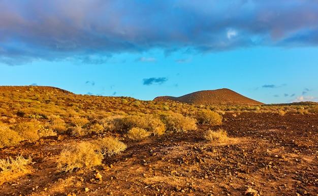 Wüstenwethbüsche im süden der insel teneriffa bei sonnenuntergang, kanaren - landschaft