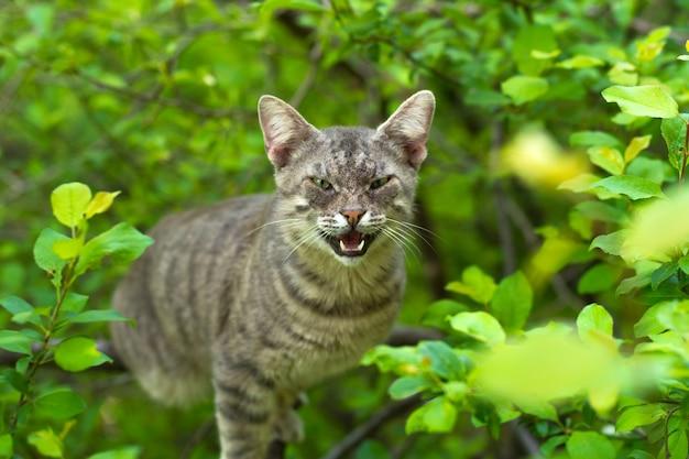 Wütende katze auf baum