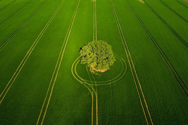 Wunderbare aussicht von oben auf einsamen baum in einem grünen feld, perfektes nachmittagslicht, schatten und farben