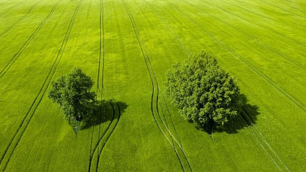Wunderbare aussicht von oben auf zwei bäume in einem grünen feld, perfektes nachmittagslicht, schatten und farben