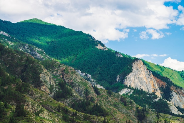 Wunderbare berge mit waldbedeckung am berghang am sonnigen tag. schöner riesiger felsiger kamm.