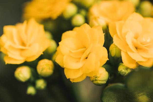 Wunderbare frische gelbe blüten