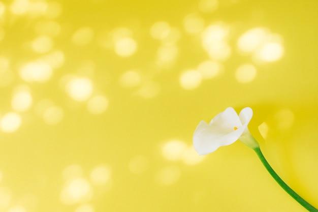 Wunderbare frische weiße blüte