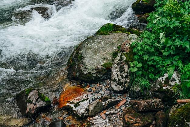 Wunderbare landschaft mit reicher flora in der nähe von mountain river. hochlandkulisse mit frischem grün, dicken moosen und großen steinen nahe kleinem fluss. klarer wasserstrom im gebirgsbach mit stromschnellen.