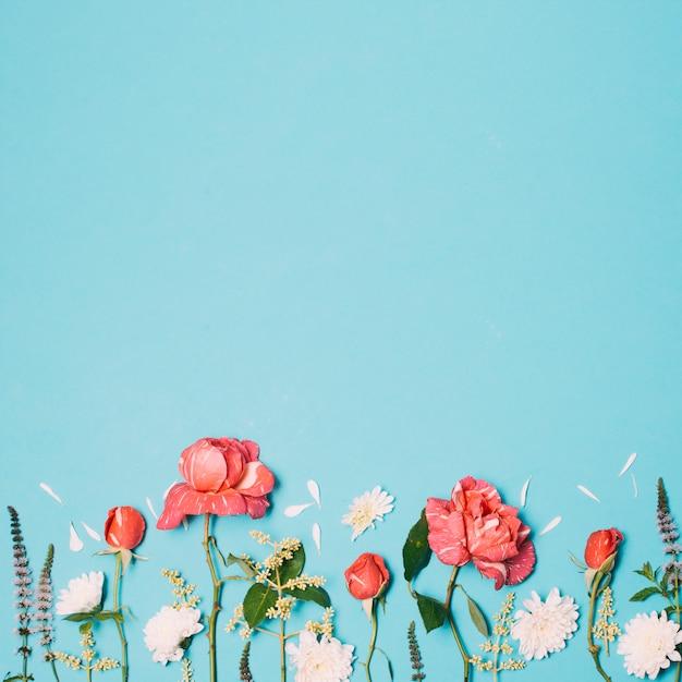 Wunderbare rote, weiße und violette blüten