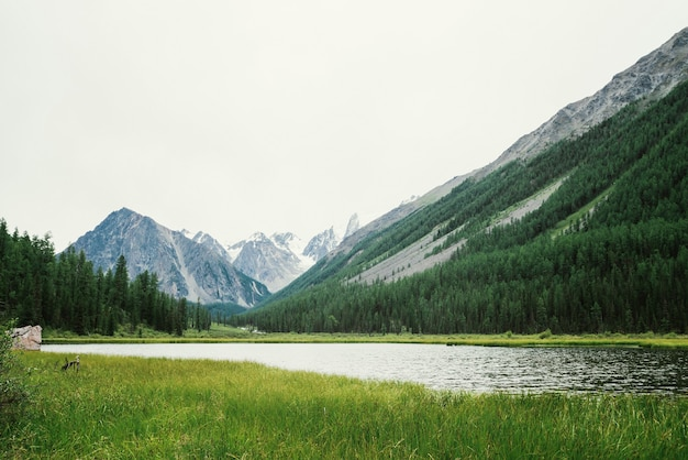 Wunderbare schneebedeckte berge hinter kleinem bergsee mit glänzendem wasser inmitten reicher vegetation.