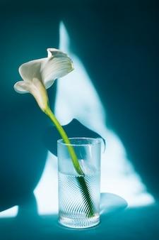 Wunderbare weiße blume im glas mit wasser