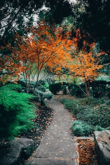 Wunderschöne aussicht auf die faszinierende natur in den traditionellen japanischen adelaide himeji gardens
