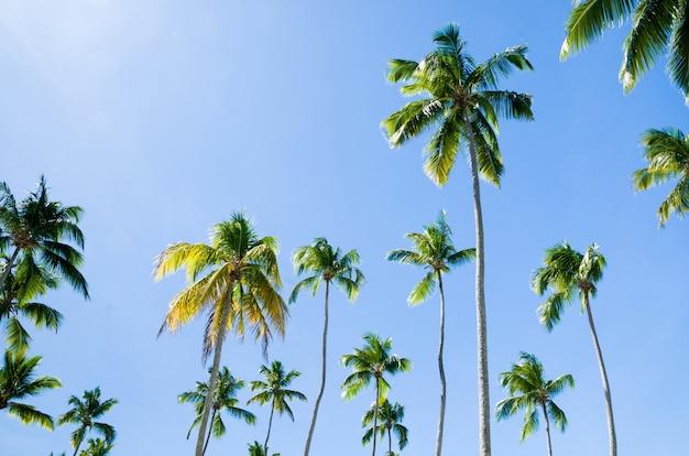 Wunderschöne kokospalmen mit blick auf den himmel, großartig