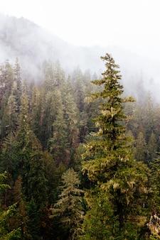 Wunderschöne landschaft eines erstaunlichen wilden waldes mit atemberaubendem grün