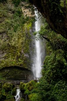 Wunderschöne landschaft eines waldes mit erstaunlichen glitzernden wasserfällen
